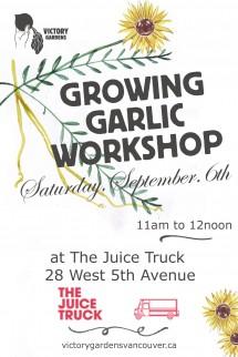 Growing Garlic Sept 6th (1)
