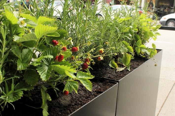 Abode Restaurant Planters
