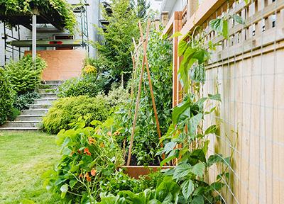 North Vancouver Vertical Garden